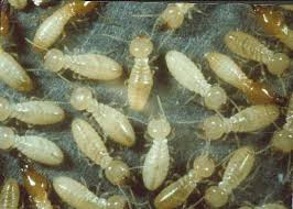 شركة مكافحة النمل الابيض / 0501214920
