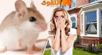شركة مكافحة الفئران بالرياض -